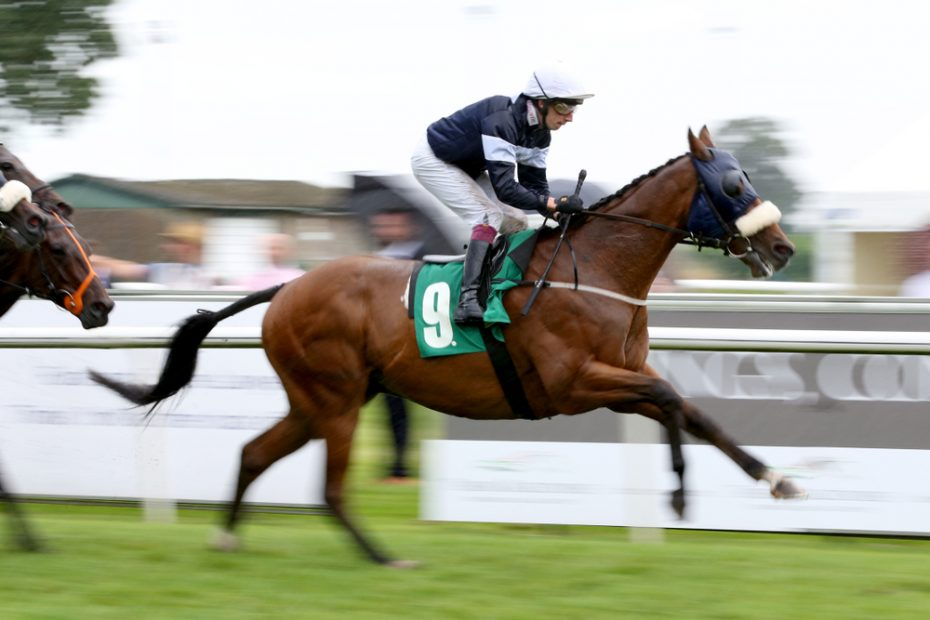 The main criteria for betting on horses: Horse Racing Guide